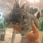 konijnenvoer
