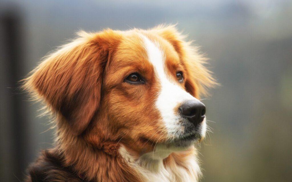 Hondensupplementen